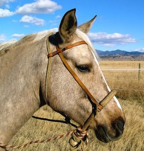 Featured of how to make a rope halter with fiador knot