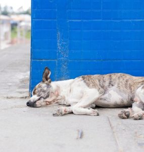 Featured of Treating Diarrhea in Dogs and Puppies