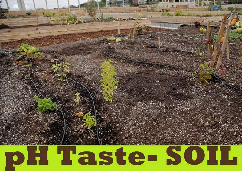 Test the pH Value of the Soil