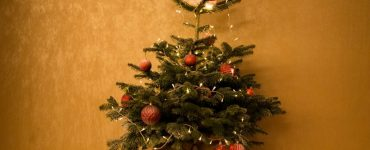 Featured of Green Holiday Ideas, How to Have a Green Christmas Tree
