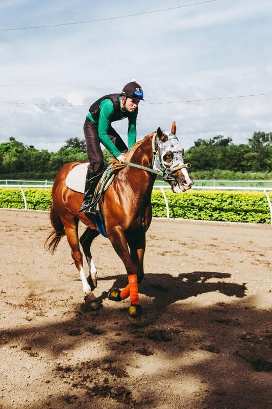 Image - Choosing the Right Horse Trainer