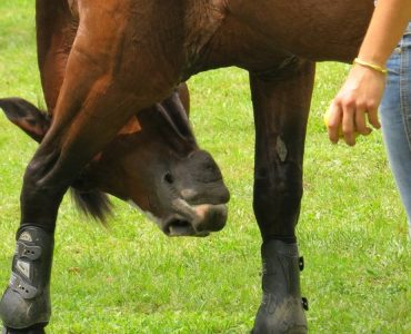 Featured image - Ten Essentials for the First-Time Horse Owner