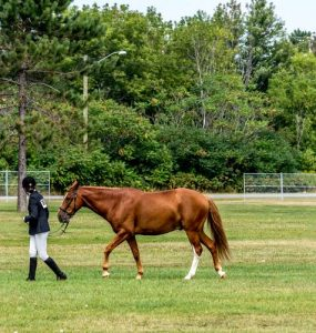Featured image - Choosing the Right Horse Trainer for You and Your Horse