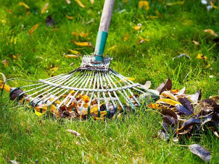 Featured image - Yard Care and Your Safety - 5 Tips You Should Never Forgo